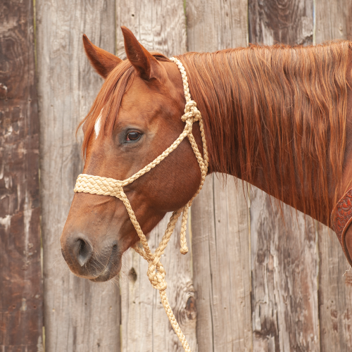 Wide Nose Mule Tape Halter with Lead